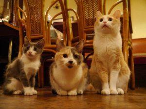 誰よりも猫に詳しくなって猫博士!猫の図書館