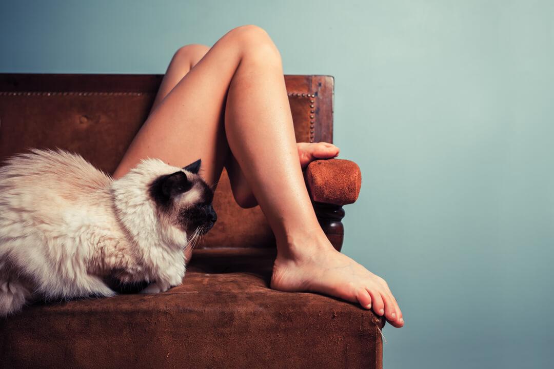 猫好きのための猫情報!