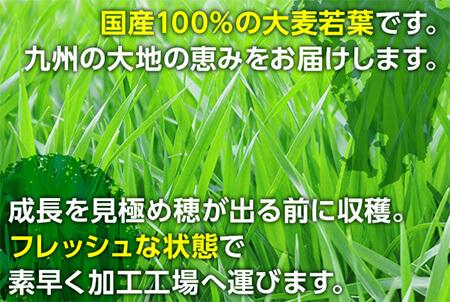 有機大麦若葉
