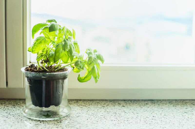【2018】初心者におすすめのベランダ菜園の野菜やおすすめキット紹介