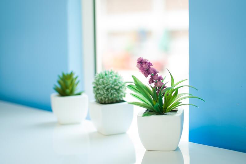 【2018】通販で買えるおしゃれな観葉植物を21選紹介