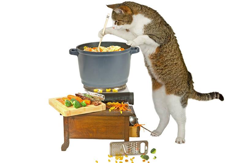 猫ダイエット アイコン