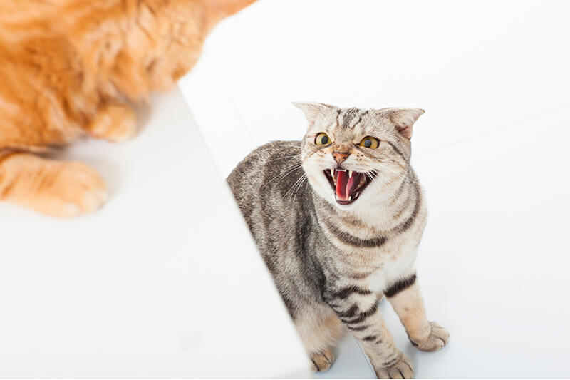 猫威嚇イメージフォトー4