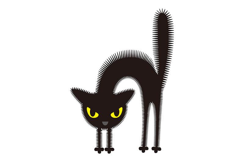 猫威嚇イメージフォトー5