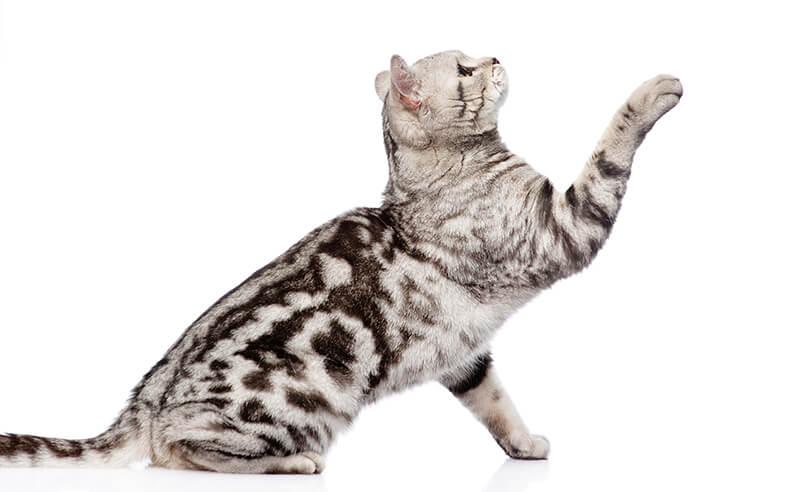 猫威嚇イメージフォトー6