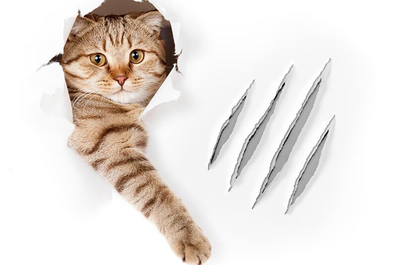 猫・ダイエットー6