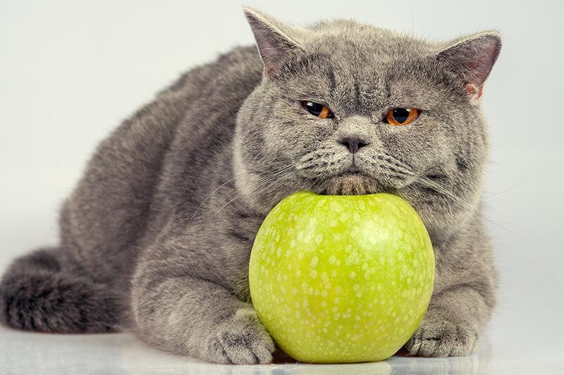 猫・ダイエットー1