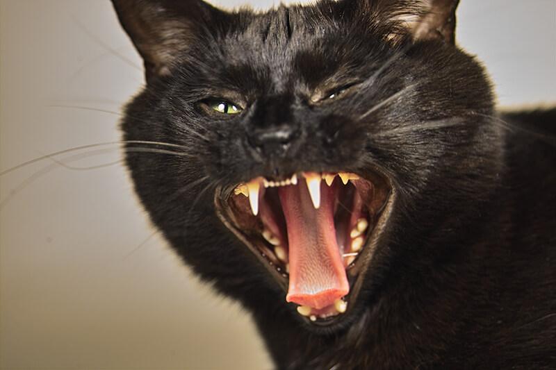 猫の威嚇・アイコン