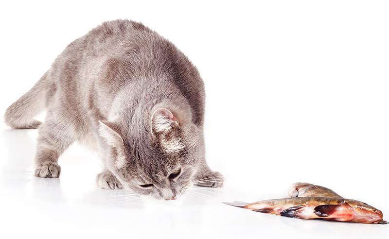 猫威嚇イメージフォトー2