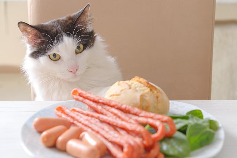 猫にオススメのキャットフード・イメージフォト