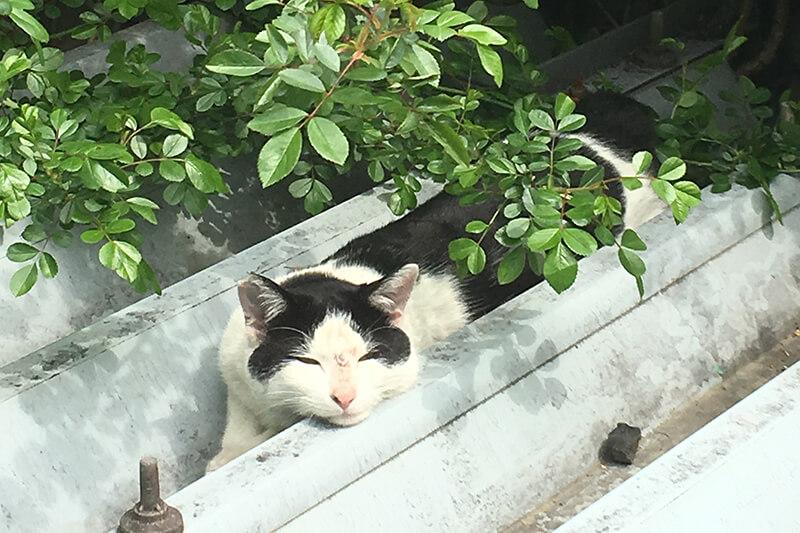 愛猫のノミを完全に駆除−1