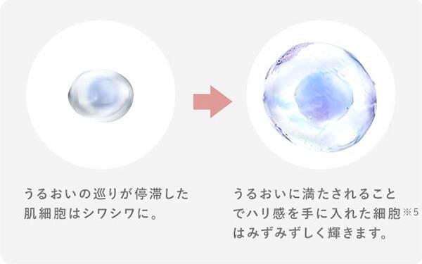 肌細胞シワシワ